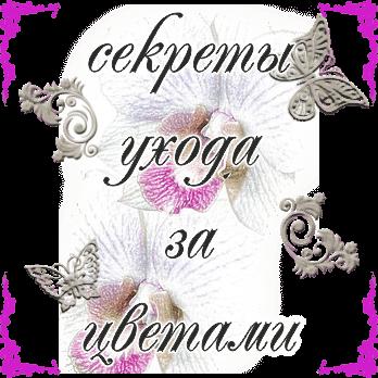 Секреты ухода за цветами